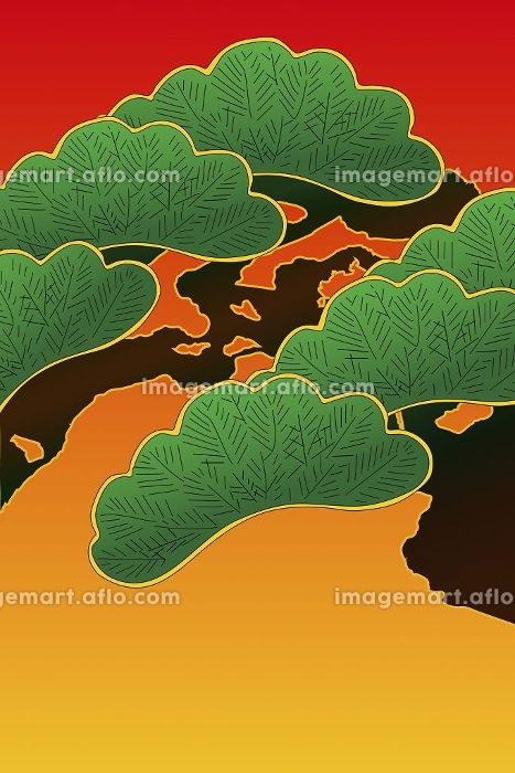 松の木の販売画像