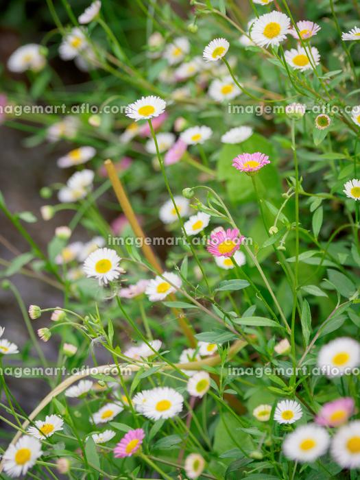 花の販売画像