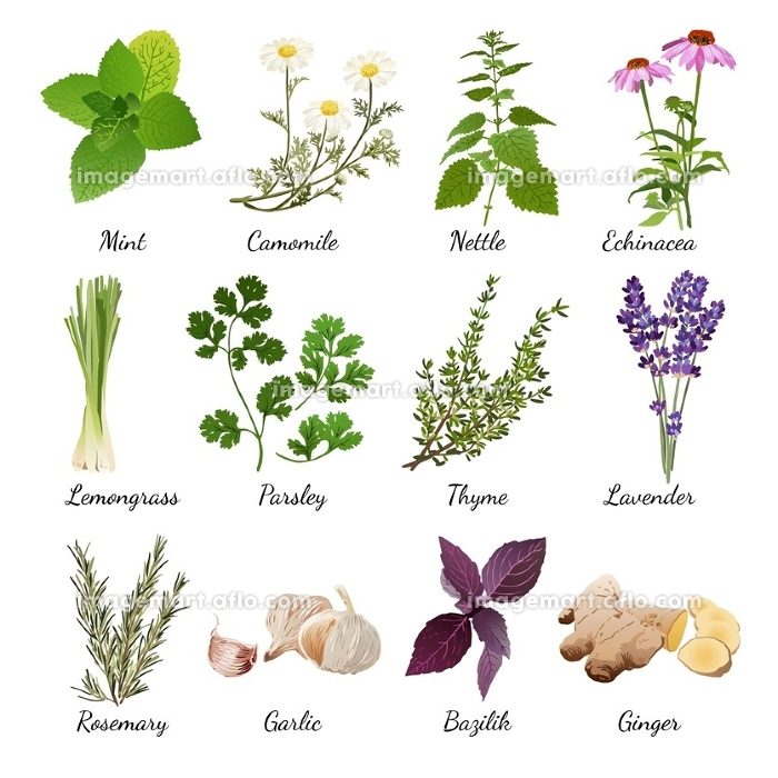 Spices And Meadow Flowers Herbal Set. Set with organic herbs objects and wildflowers elements isolated vector illustration