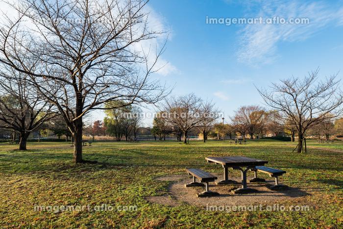 朝の公園の風景 12月 東京都足立区舎人公園の販売画像