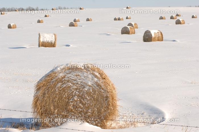 アルバータ州 回覧 大草原の販売画像
