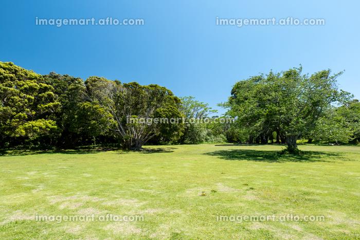 青空広がる初夏の公園 千葉県大房岬 5月の販売画像