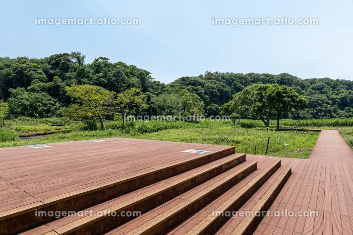 小網代の森のえのきテラス 6月 三浦半島の販売画像