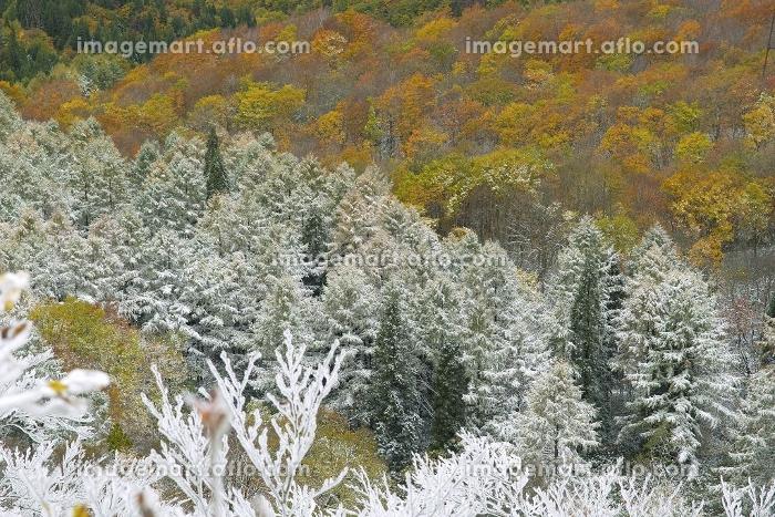 霧氷と紅葉の販売画像