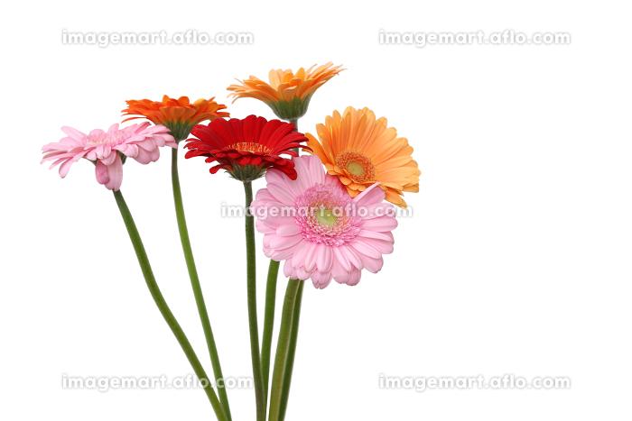 ガーベラの花束の販売画像