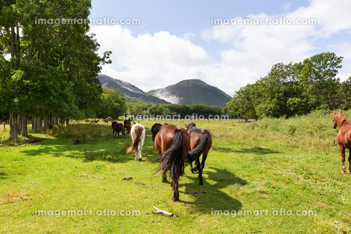 日本の北海道東部・9月、放牧された馬の販売画像