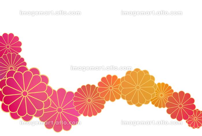 ハガキ 菊帯暖色グラデ イラスト 1の販売画像