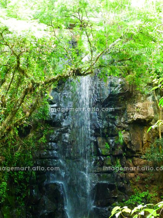 アルゼンチン・ブラジル国境エリアのイグアスの滝にて森林の中を流れる一筋の小さな滝の販売画像
