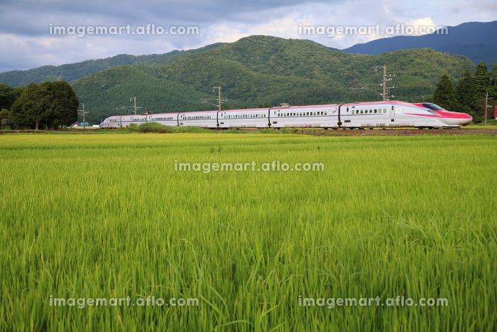 田園地帯を走る秋田新幹線こまちの販売画像