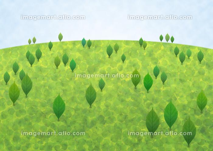 緑の山の販売画像