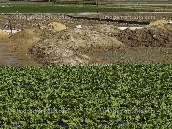 田んぼの土壌の入れ替え工事