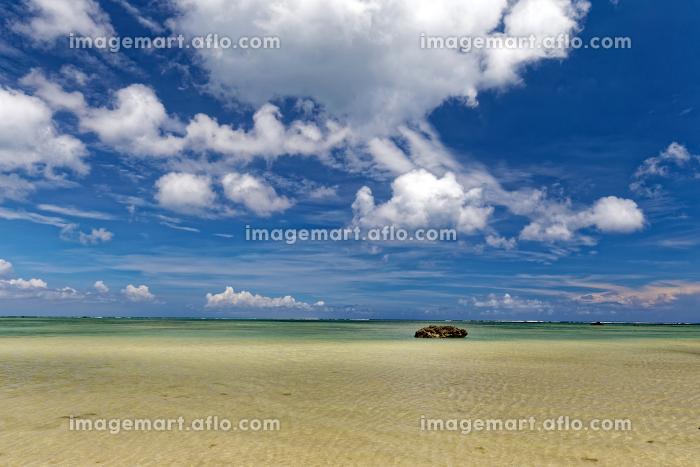 白保海岸 石垣島 珊瑚養殖保護の販売画像
