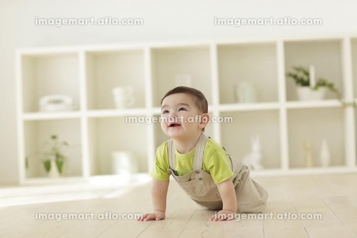 リビングをハイハイする赤ちゃんの販売画像