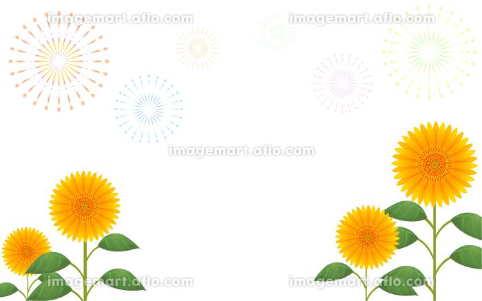 白色(透過)背景の向日葵と打ち上げ花火の販売画像