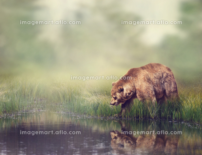 極度 素晴らしい 動物相の販売画像