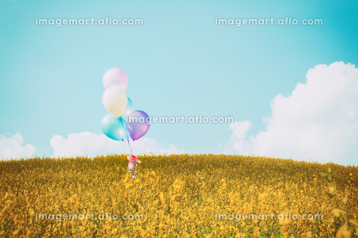 Colorful balloon over yellow flower fields with blue sky backgroの販売画像