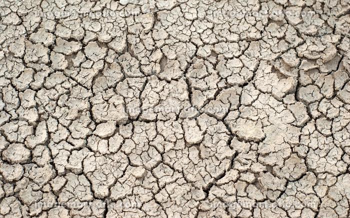 droughtの販売画像