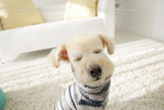 バッグに入る可愛い犬