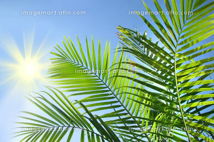 ヤシの木と太陽