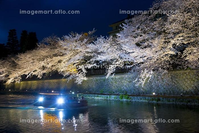 岡崎疎水の夜桜と十石舟の販売画像