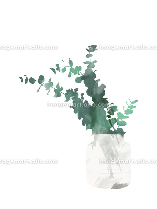 Hand painted eucalyptus in the bottle or vase isolated on white background. Floral botanical clip art for design or print - Illustration watercolor