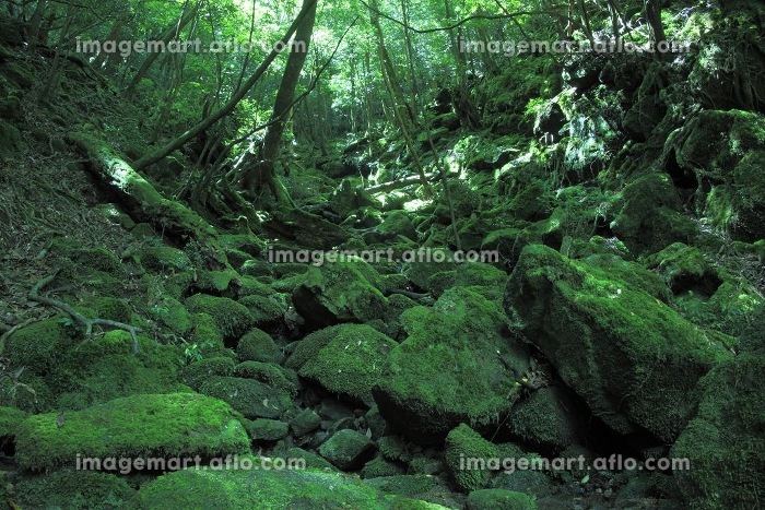 苔の販売画像