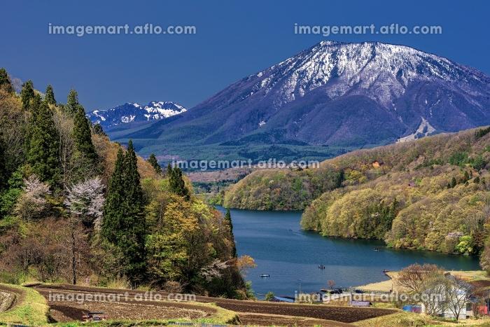 長野県・信濃町 新緑の黒姫山と野尻湖の風景の販売画像