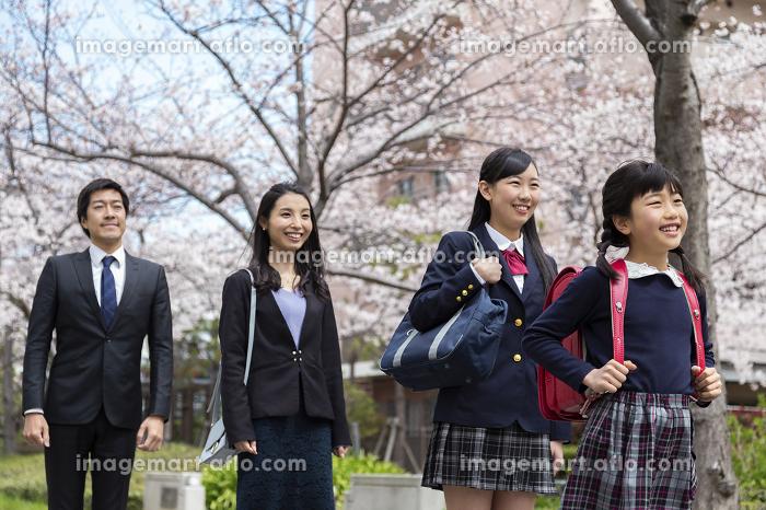 桜並木の下に立つ家族の販売画像