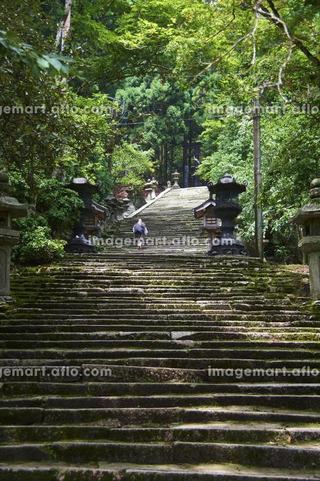 愛宕山本殿までの階段の販売画像