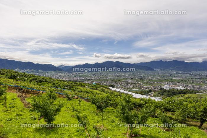 日本・7月の山梨県、梅雨の晴れ間の桃畑と甲府の販売画像