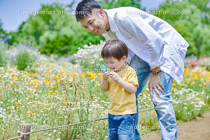 花を観察する日本人親子の販売画像