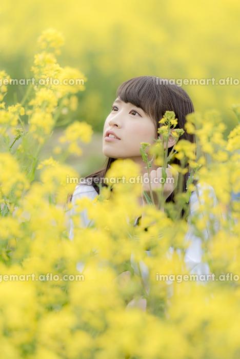 菜の花畑の中の女子高生の販売画像