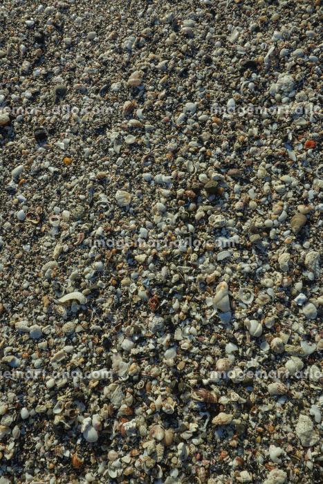 小さな貝殻でビッシリ敷き詰められた波打ち際