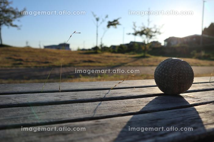 ベンチに置かれた野球ボールの販売画像