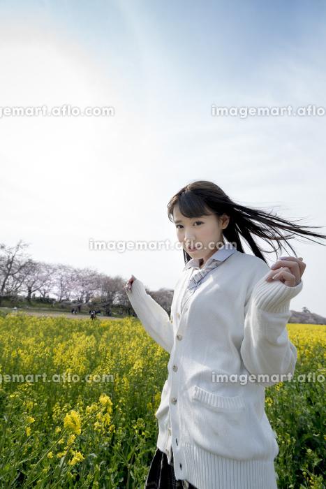桜、空、春、女性、女子、セミロング、女子高生、制服、学生服、ブレザー、カーディガン、リボン、菜の花、人、女の子、少女、埼玉県、幸手市、幸手、権現堂、権現堂堤、日本、STMN0001