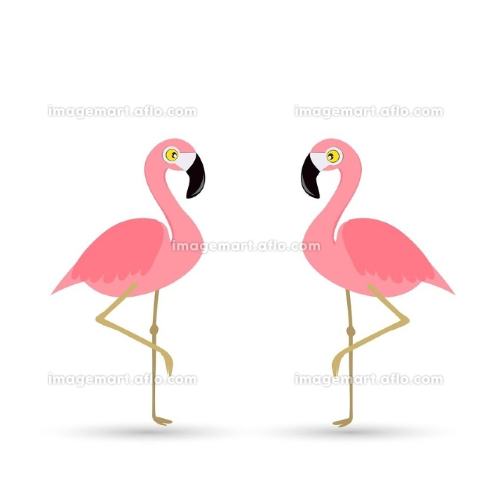 Pink flamingo on a white background.