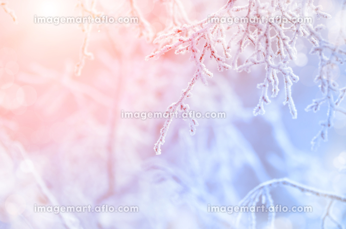 White Frost on tree twigs against rosy sun lightの販売画像