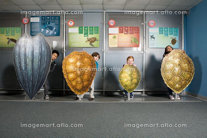 Four friends standing behind sea turtle shellsの販売画像