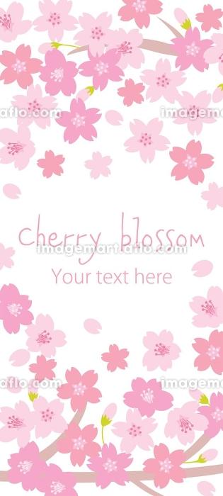 満開の桜の縦長の背景デザインの販売画像