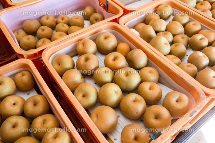 9月、梨の直売所・千葉県、日本の販売画像