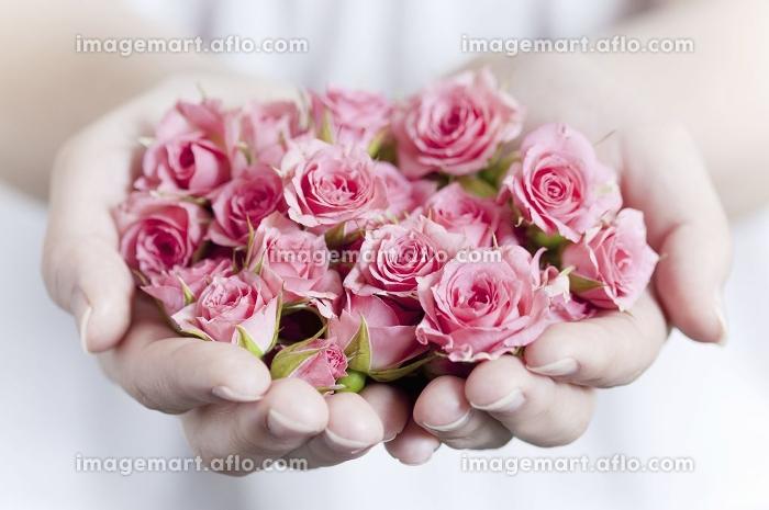 両手いっぱいのピンクのバラの販売画像