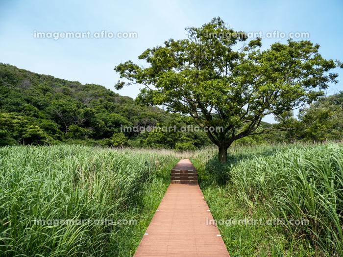 小網代の森の草原と木々 6月の販売画像