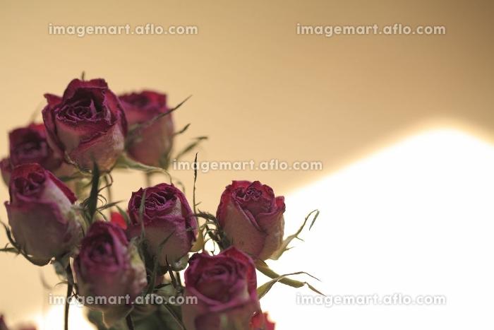 薔薇シルエットの販売画像