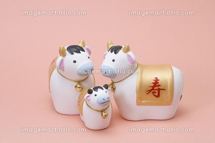 牛の販売画像