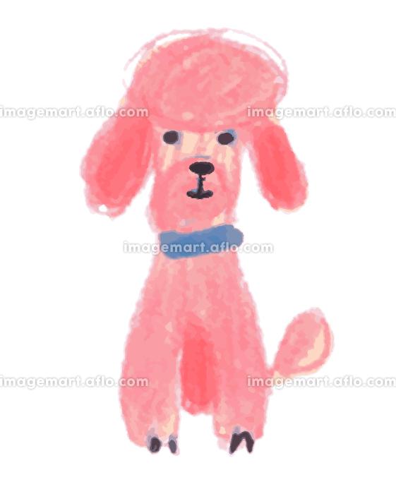 ピンクのプードルの販売画像