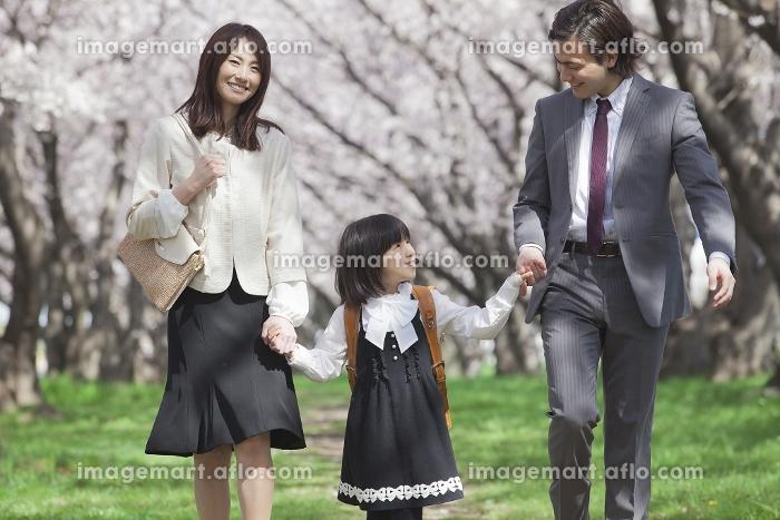 桜並木を歩く家族の販売画像