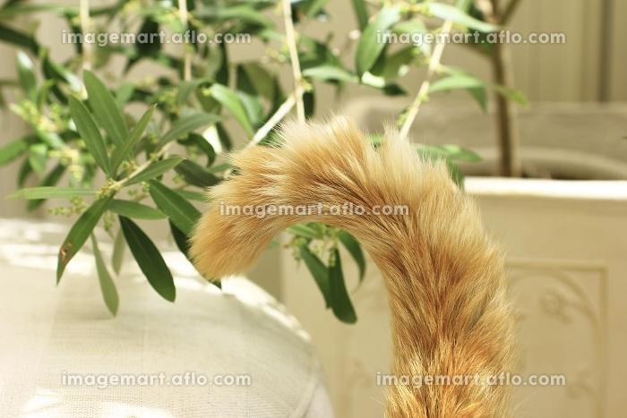 オリーブの木を背景に猫のしっぽ