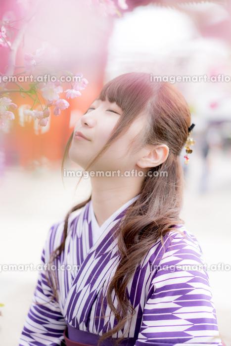 桜の前でうっとりする袴の女性の販売画像